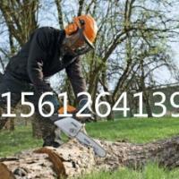 供应江苏伐木工具油锯进口链条进口导板