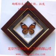 虎斑蝶定做标本礼品装饰画10元/件图片