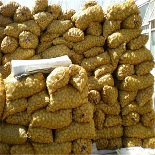 荷兰十五土豆图片_荷兰十五土豆图片大全_荷兰十五_一图片