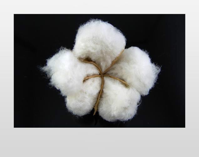 云南精梳皮棉批发商/沙漠雪供图片/云南精梳皮棉批发商/沙漠雪供样板图 (2)
