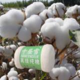 供应手工棉花被-怎样做棉被-手工棉被用什么棉花好
