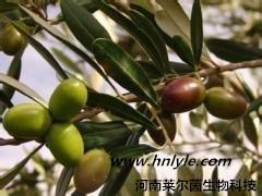 供应 橄榄苦甙河南 植物提取物 供应商 报价