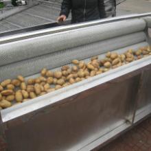 供应土豆毛辊清洗机   毛辊清洗机   根茎类清洗机
