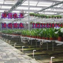 供应温室配套温室苗床@大名绿荫农业工程有限公司为您保驾护航批发