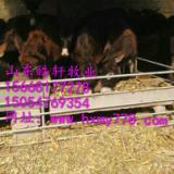 供应泉州毛驴去哪里买肉驴养殖