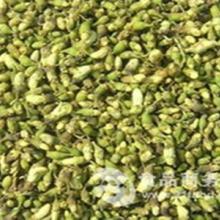 供应槐花提取物/ 天然槐花原料提取物 厂家专业供应