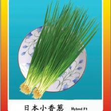 供应日本独根小香葱种子基地专供有机蔬菜种子公司批发