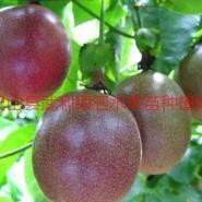 三亚百香果苗图片
