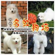广州名虹正规狗场在那里图片