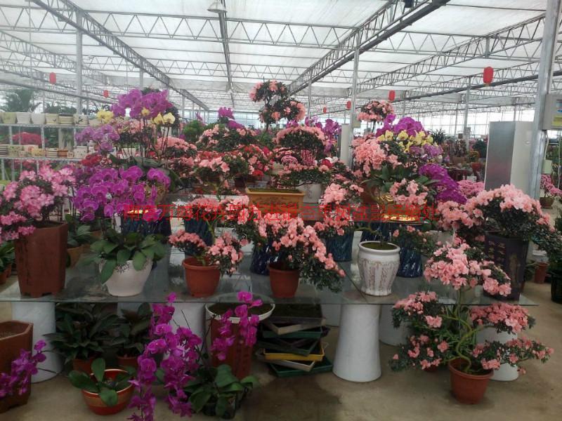 供应南京室内花卉,南京室内花卉价格,南京室内花卉大量批发