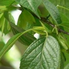 供应用于的厂家直供原料丁香酚