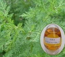 供应用于的厂家直供原料青蒿油