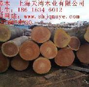 浙江山樟木批发图片