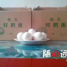 供应鹅蛋供应