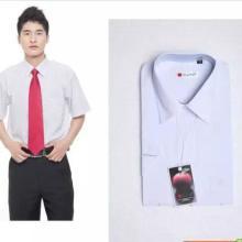 供应佛山时尚衬衫,佛山时尚衬衫经销商,佛山时尚衬衫订制价格