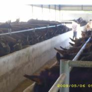 徐州的驴价格图片