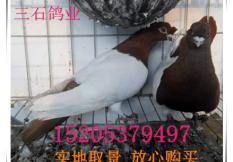 嘉祥县三石特种养殖场简介