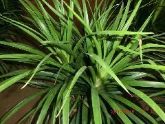 供应提供绿化植物鲜花