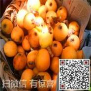 苏州白玉枇杷团购价格图片