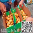 白沙白玉枇杷订购价格图片