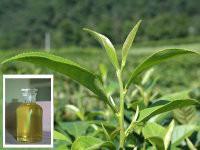 茶树油报价