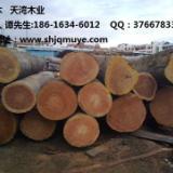 供应大型防腐木山樟木批发商 国内专业木材生产厂家 批发进口名贵木材
