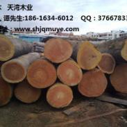 大型防腐木山樟木批发商图片
