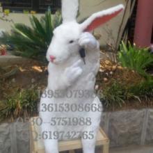 供应卡通兔子