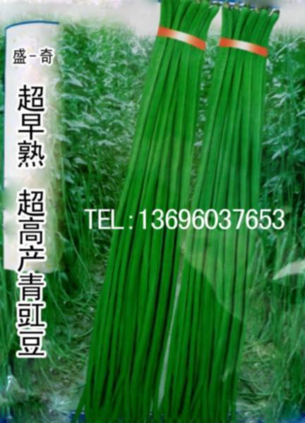 供应用于种子的早熟青条豇豆优势品种