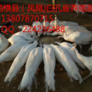 广西横县白养殖场图片