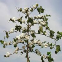 贵州贵阳纯棉棉絮厂家专业生产