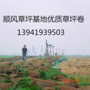 辽阳沈阳大连开发区草坪图片
