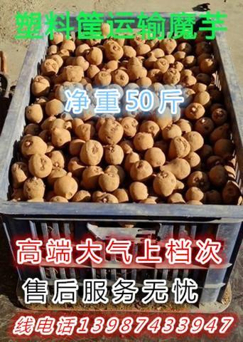 供应安宁魔芋种子批发商、安宁子魔芋批发商、安宁花魔芋种子批发商、安宁一代、二代、三代魔芋种子批发商
