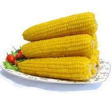 供应用于的甜玉米还是河南新野沙堰化陂的好图片