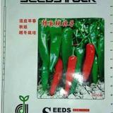 韩国辣妹子 辣椒种子种苗  寿光绿兴 高产抗病良种