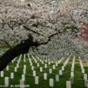 供应廊坊市的万松公墓