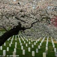 植树葬规格图片