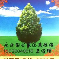 供应植树葬网,天津植树葬网
